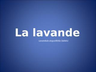 lavanda.pps